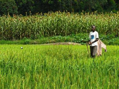 # 12: Ruanda
