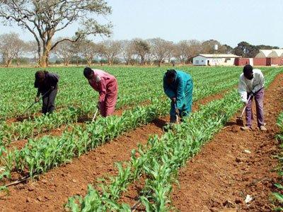 # 17: Zambia