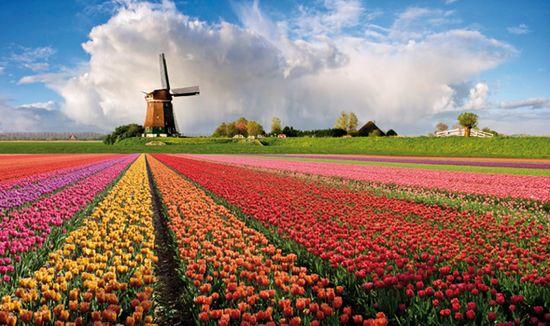Risultati immagini per olanda