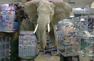 elefante-nella-stanza-cristalli