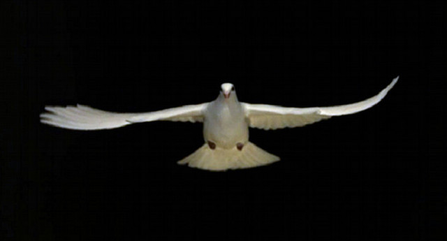 dove-in-flight-FOMC