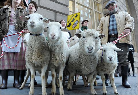 pecore-borsa