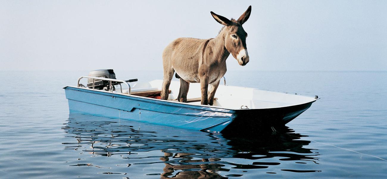 asino-su-barca-che-affonda
